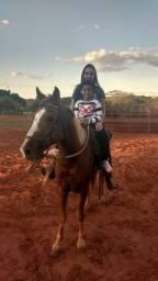 Cavalo 1/2 Sangue QM
