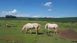 Dois cavalos ensilhados