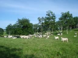 Fazenda em Porto Nacional - TO, p/ Pecuária