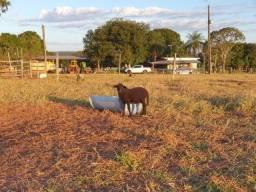 Fazenda com 163 alq - Pecuária - Região de Costa Rica - MS