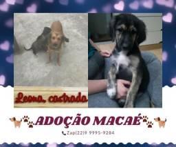 Cachorrinhos para doação, Norte Fluminense