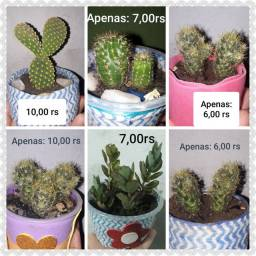 Cactos e plantas