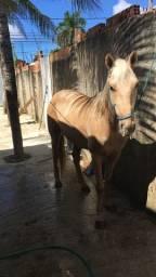 Cavalo de Vaquejada, Função: Esteira