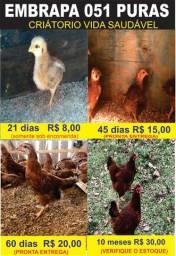 Galinhas Embrapa 051 ,
