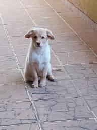 Doar cachorro
