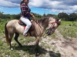 Excelente Cavalo Manga Larga