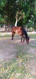 Cavalo, vendo, trocar