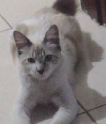 Gato de estimação