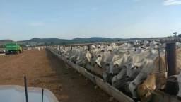 Fazenda - 5.200 alq - pecuária - Iporá - GO- entrada + prazo 9 anos