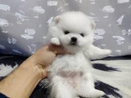 Fêmea Branca - baby face