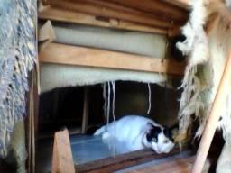 Uma gata muito fofa para adotar