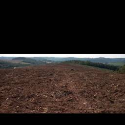 Terreno para plantio