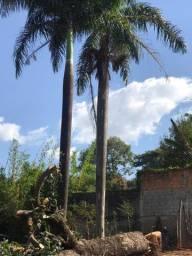 Palmeiras Imperial (Pampulha)