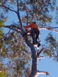 Título do anúncio: Podas e cortes de árvores de Alta periculosidade