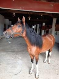 Título do anúncio: Cavalo Mangalarga Marchador 2a E 9m - Ac. Carro Como Troca