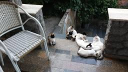 lindos gatos para doação
