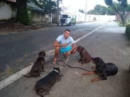 Adestramento educação canina a domicílio