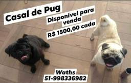 Casal Pug
