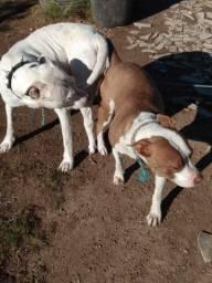 Filhotes disponível dog com red nose