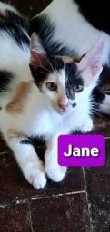 Filhotes de Gato CASTRADOS para adoção responsável