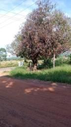 Terreno na Av principal Bom jardim