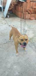 Pit Monster 1 ano