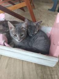 Gatinho e gatinha para doação