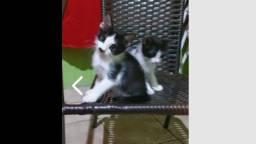 Adoção de lindos gatinhos machos 2 meses!!