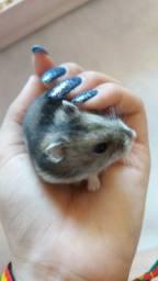 Vende-se hamster 30 reais  retirar no roçado