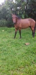 Cavalo extra de sela.