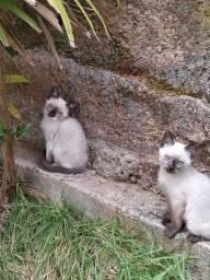 Doação gatinhas