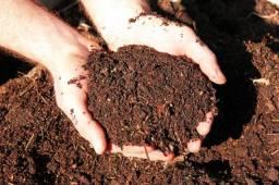 Adubos Palmeira, Orgânicos partes vegetativas triturado