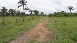 Título do anúncio: Fazenda 296 hectares 10 km do porto de Porto velho