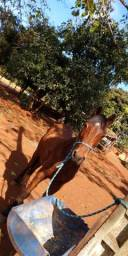 Cavalo + sela