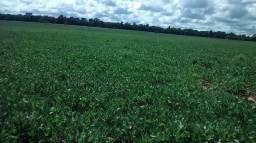 Vende-se Fazenda em Querência do Norte-PR