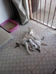 Gatinhos fofos para adoção responsável