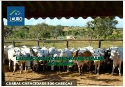 Fazenda Veredas com 3.950,95 hectares em Buritizeiro-MG