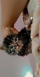 Gatinhos fofos e peludos