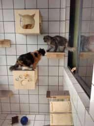 Circuito para gatos