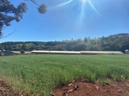 Sitio com rentabilidade garantida guaraniaçu