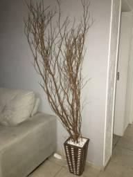 Planta seca