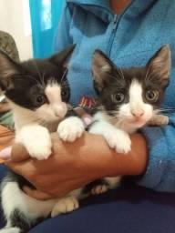 Doa-se filhotes de gatinhos com 2 meses