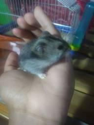 Doação de Hamsters