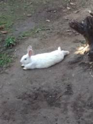 Doa-se coelhos