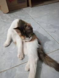 Tenho essas duas gatinhas pra adoção, tem 3 meses