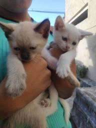 Gatinhos filhotinhos doação!