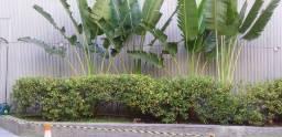 Título do anúncio: Manutenção de jardins,poda,replantio, manutenção geral.