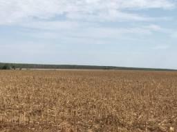 Fazenda produzindo Soja, 700 alqueires, 25 km da cidade