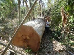 Fazenda em ACRE - AC, p/ Pecuária e Manejo Florestal