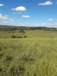 Fazenda 303 ha plantação e gado